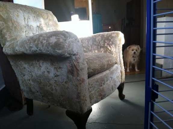 daphne-and-armchair-575x429